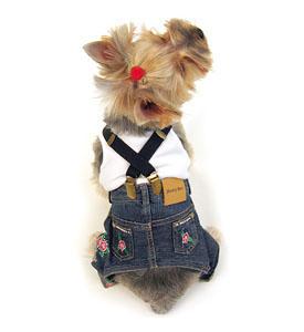 cão calças jeans